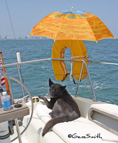 black Chow mix dog relaxes on deck of sailboat offshore under yellow umbrella