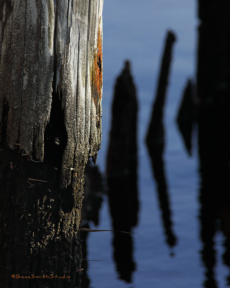Gnarly old sea wall piling rots away on Bass River in New Jersey.