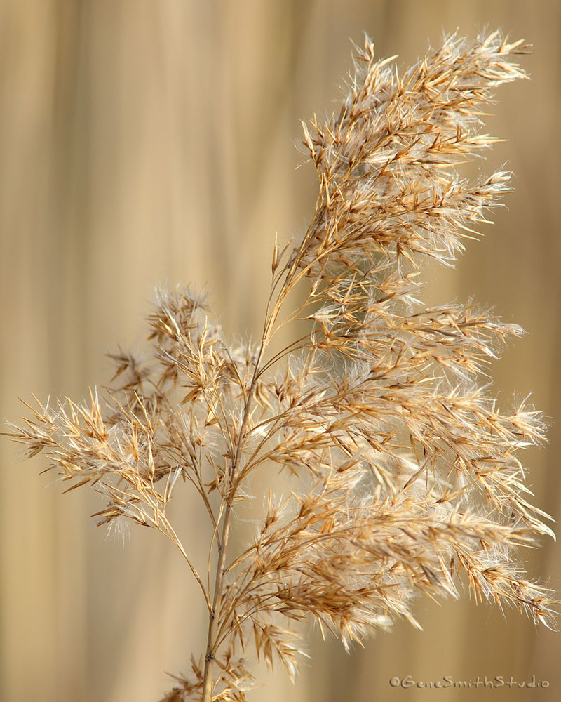 Wetlands reeds photographed with ultra long lens